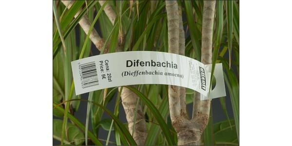 Маркировка и учёт растений, саженцев, деревьев.